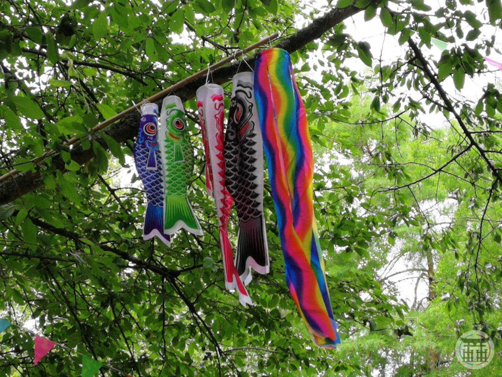 Poissons koinoburi
